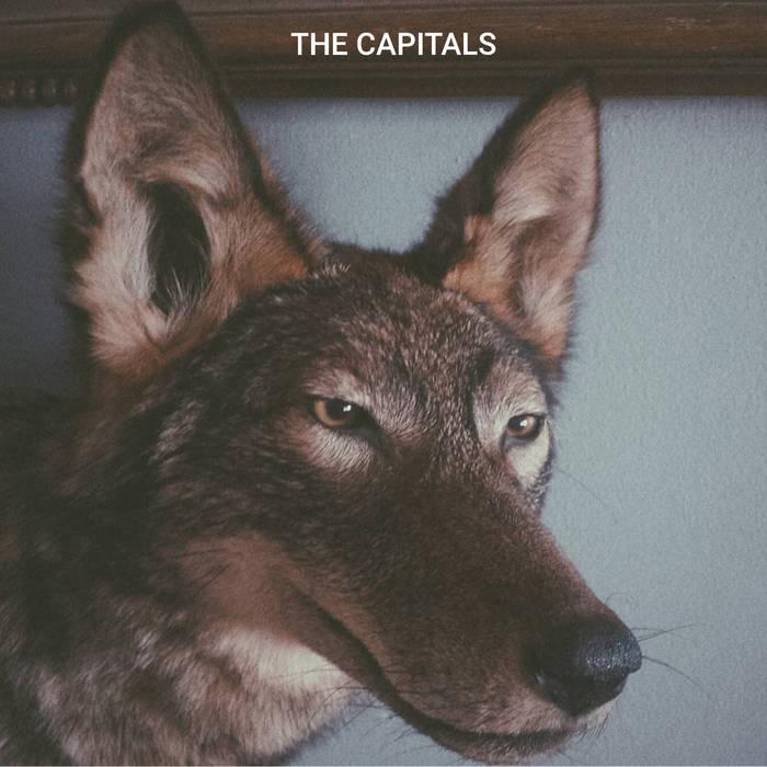 The Capitals - Coyote