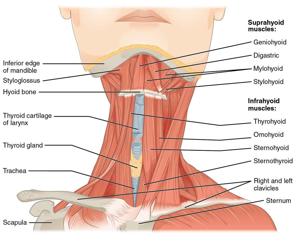 Whiplash Chiropractic