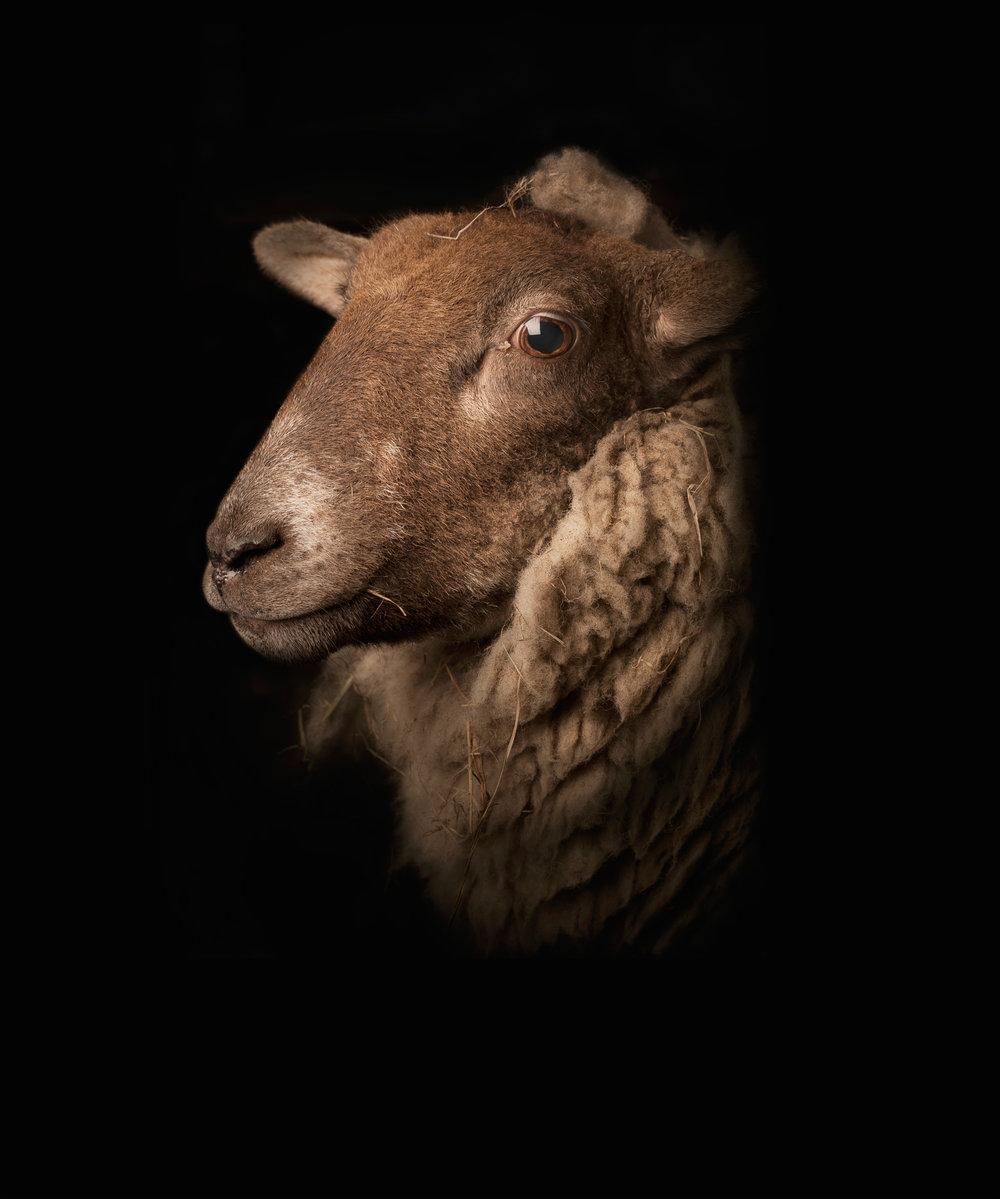 Lamb 1 - Personal Project