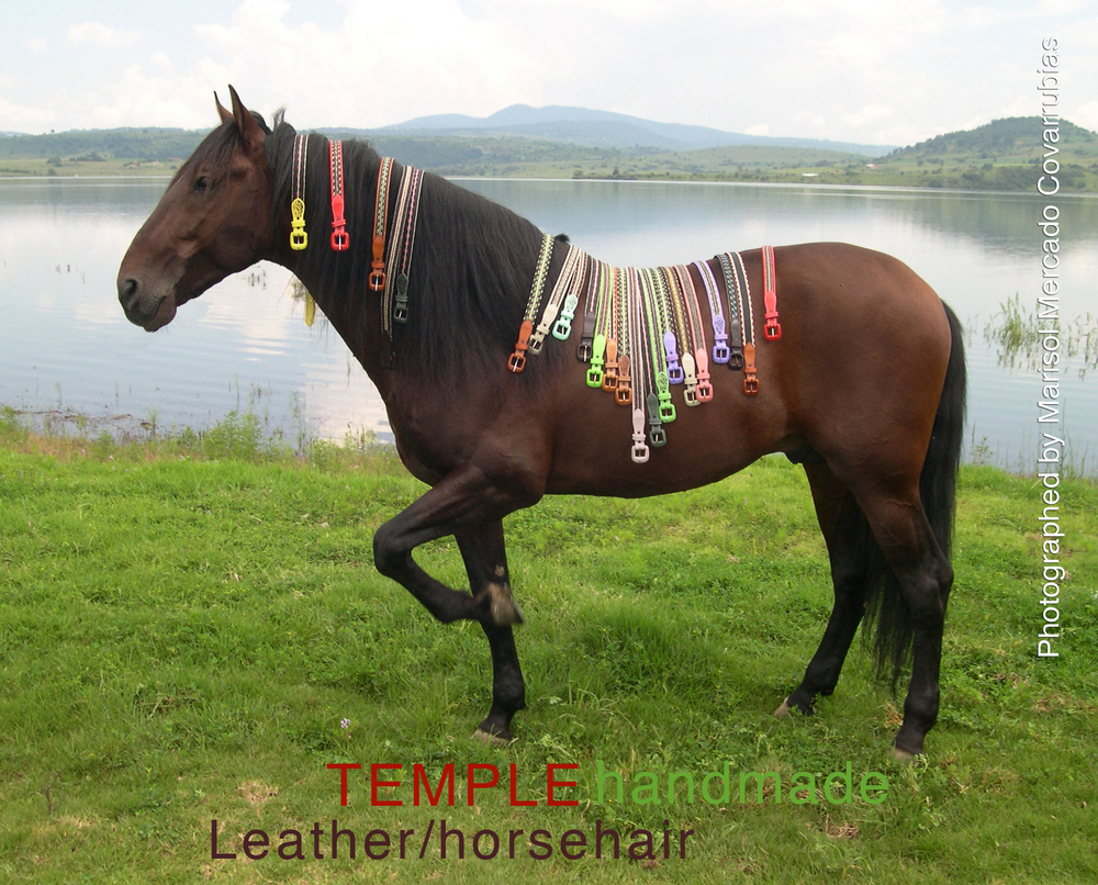 Belts-on-Horse-web.jpg