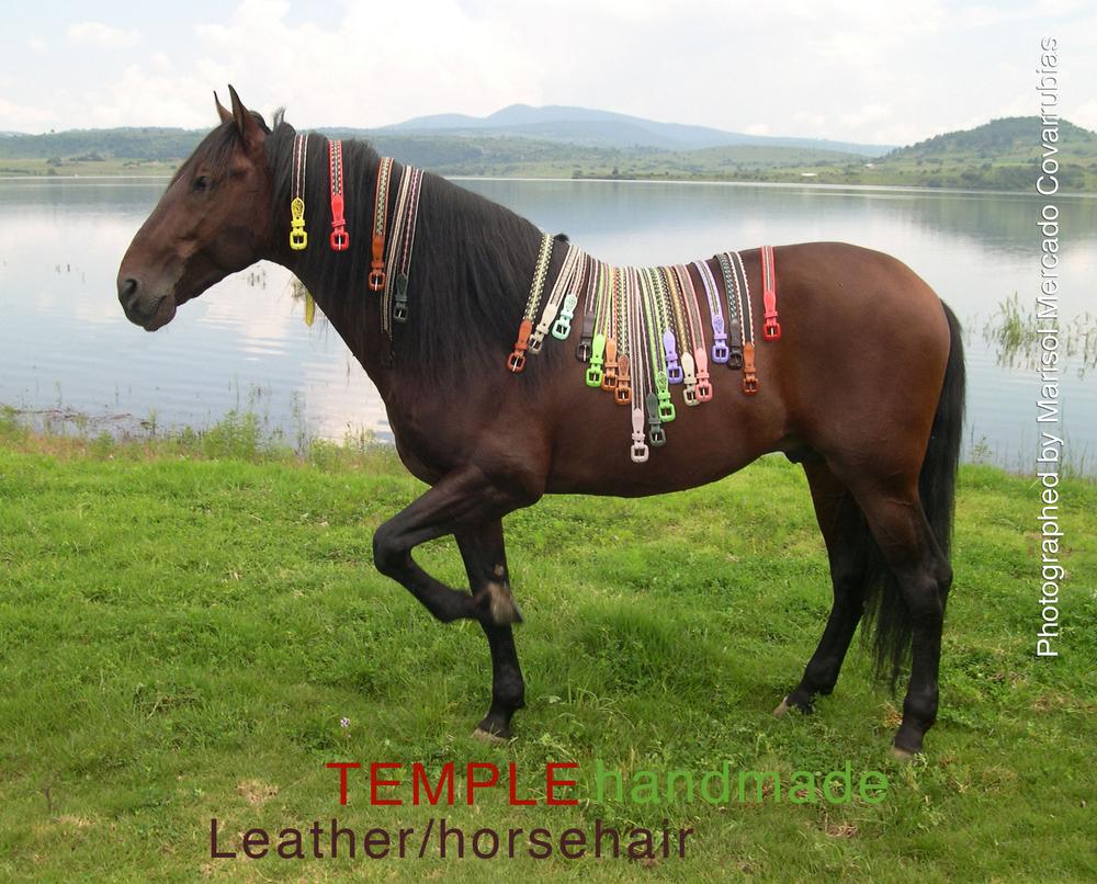 Belts-on-Horse-web.jpg
