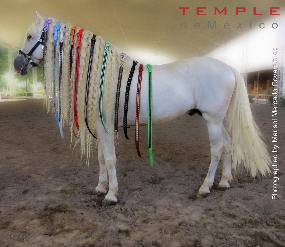 caballo y blur.jpg