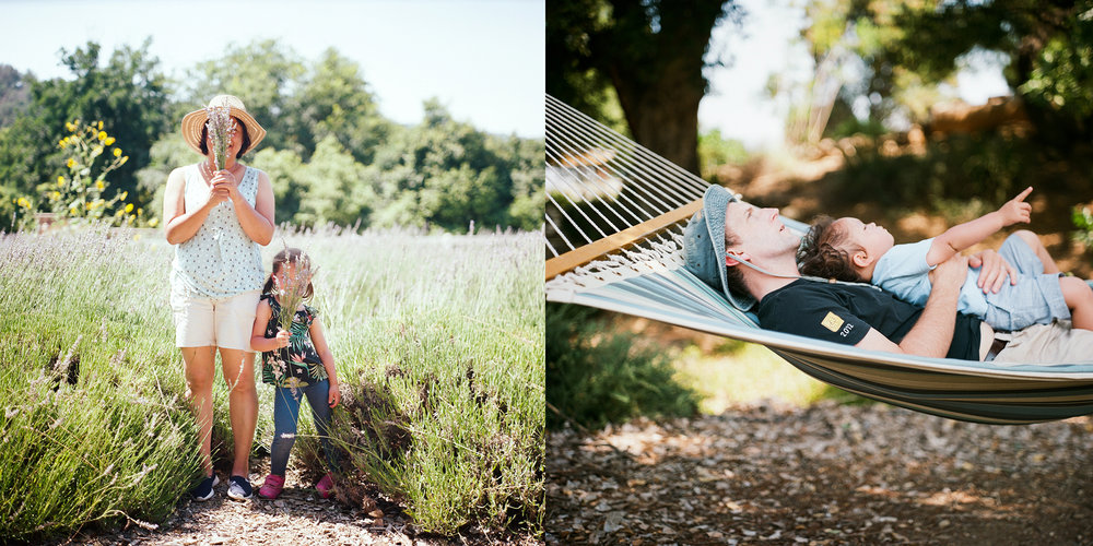 Frog Creek Lavender Farm by Po Chi Fung Photography / Ojai Family Photographer