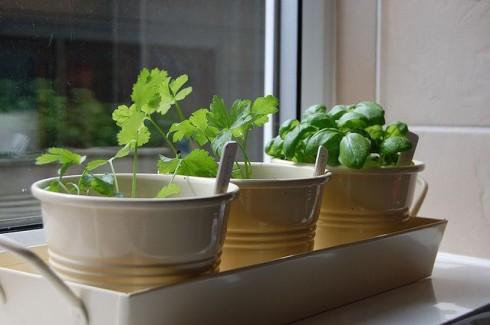 14 cancer fighting plants for your indoor herb garden kem cancer how to plan grow your own indoor herb garden workwithnaturefo