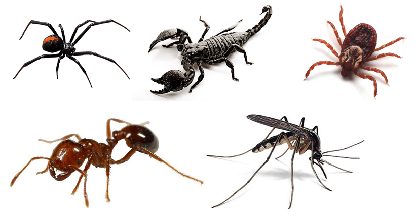 From upper left corner: black widow, scorpion, tick, fire ant, mosquito