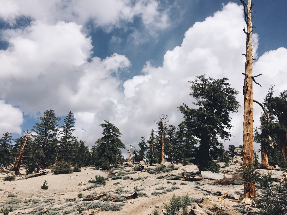 I love the clouds in the sierras.