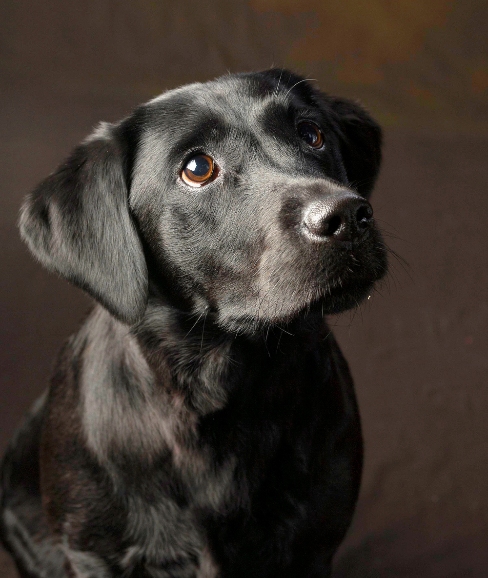 dog,photography, photographer, greenwich, darien, norwalk, stamford, rye, white plains