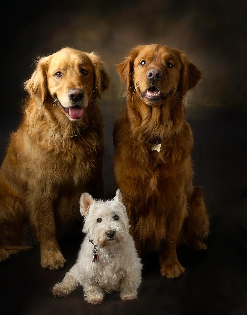 dogs,photography, photographer, greenwich, darien, norwalk, stamford, rye, white plains
