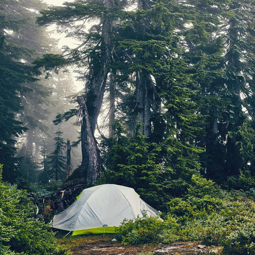 Tent in Forest, Vancouver, British Columbia | Photo property of Evergreen Kitchen