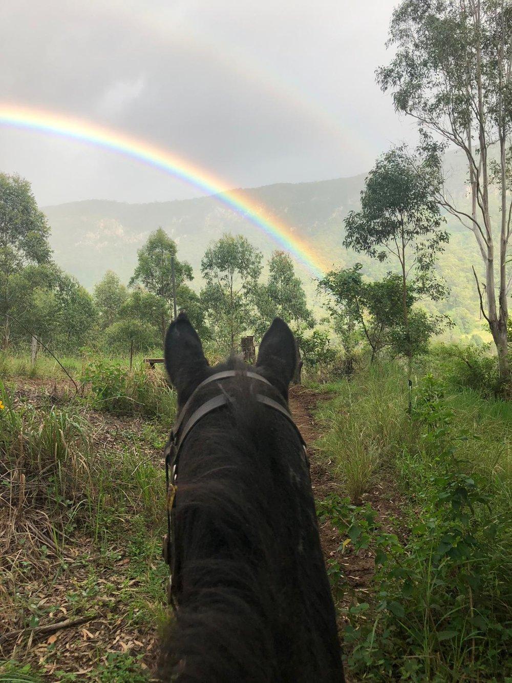 horse rainbow.jpg