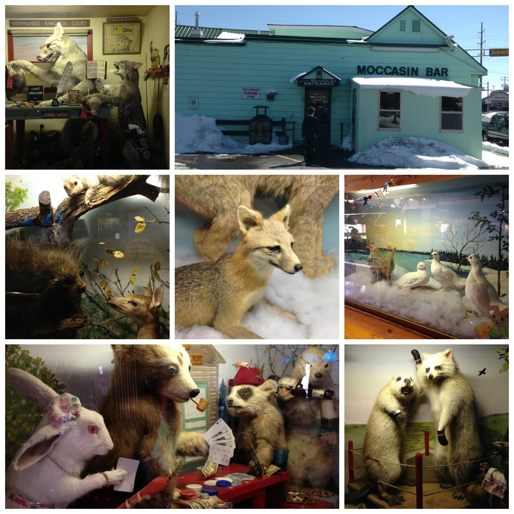 taxidermycollage.jpg