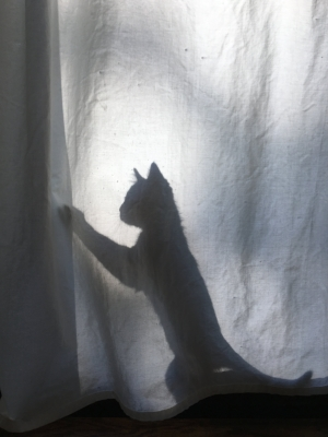 shadow kitten
