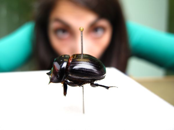 Helena-Maratheftis-beetle-and-me-03.jpg
