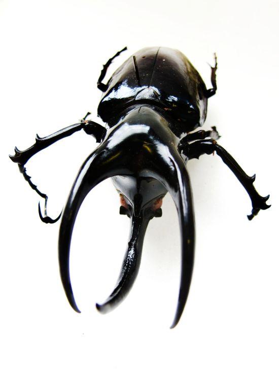 Helena-Maratheftis-photography-beetle-04.jpg