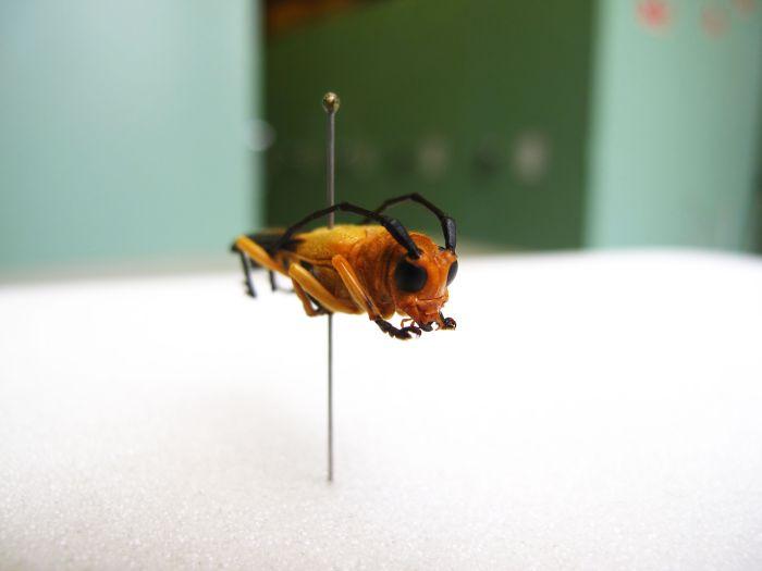 Helena-Maratheftis-photography-beetle-07.jpg