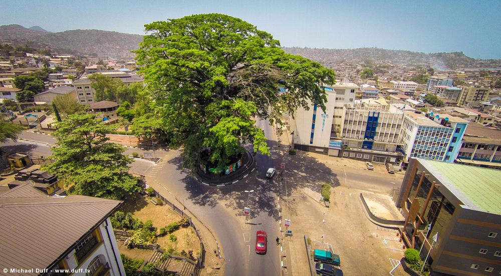 Freetown's Iconic Cotton Tree