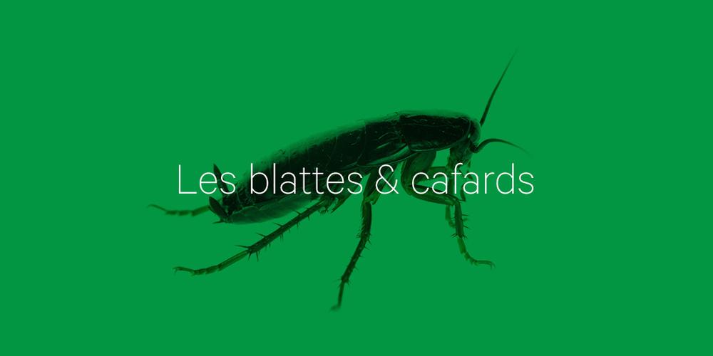 lutte blattes et cafards 06 : faites appel à un spécialiste 3d