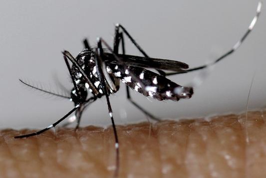 moustiques-tigres-démoustication-alpes-maritimes.jpg