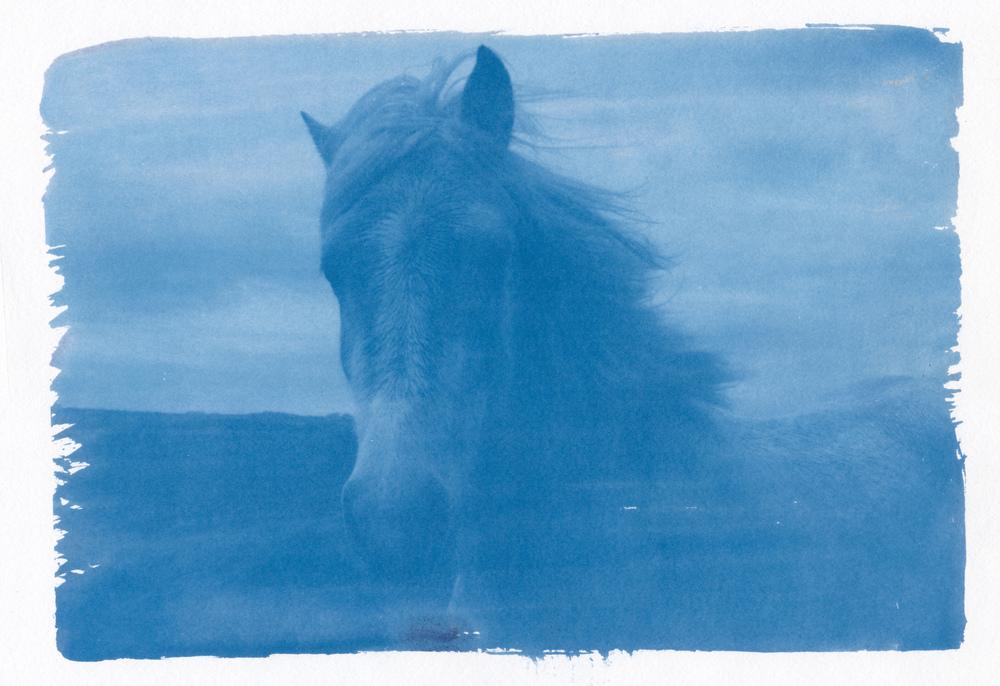 horse cyan.jpg