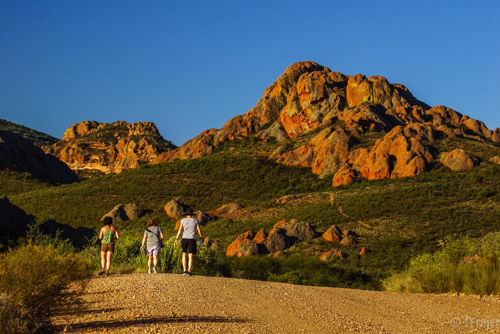Karoo near Calitzdorp