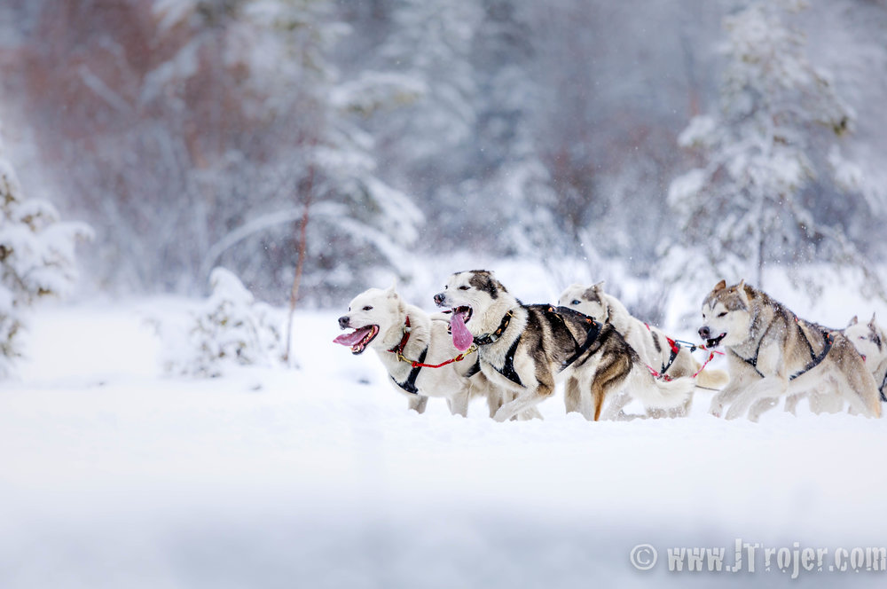 Dog Sledding in Tirol