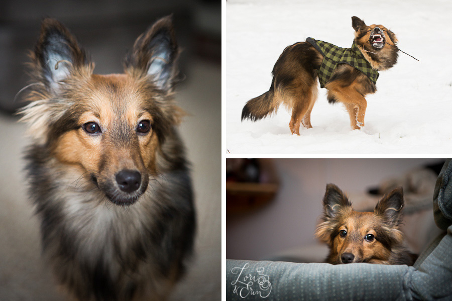 three photos of my dog mouse