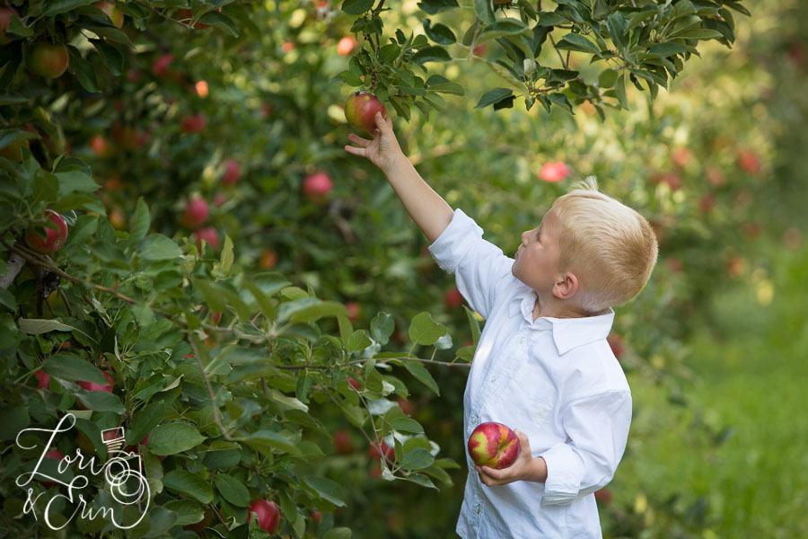little boy apple picking