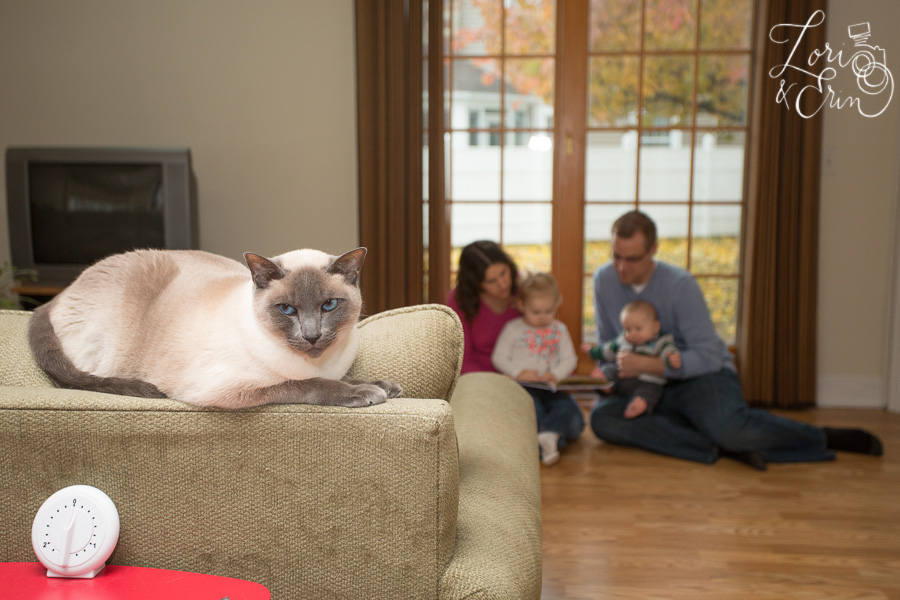 funny portrait cat and family
