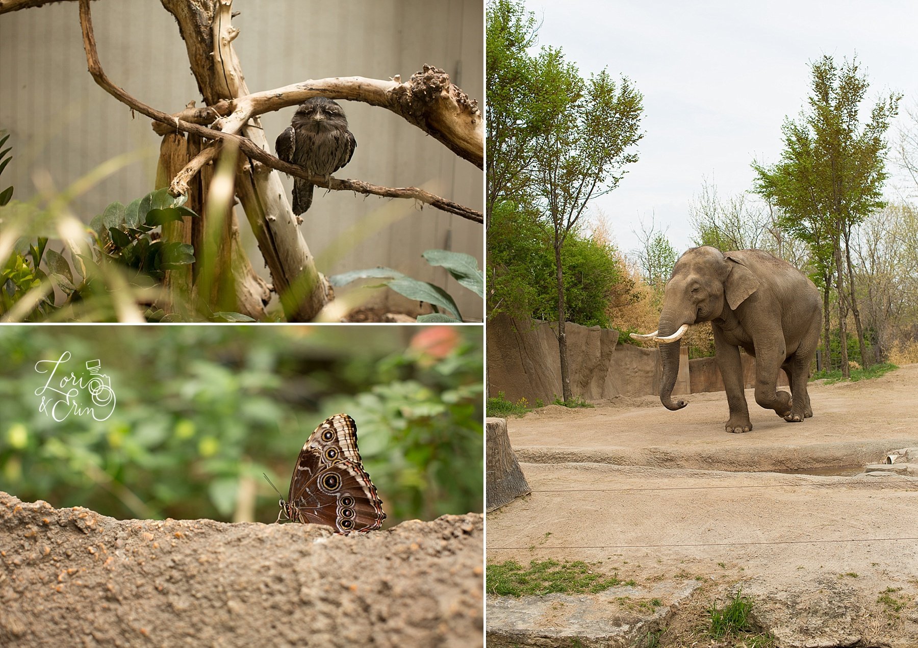 St Louis Zoo, Rochester NY Photography