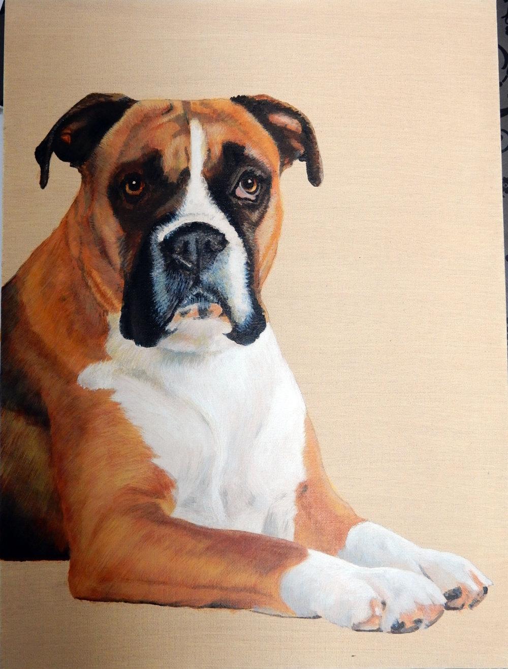 Rosie-Boxer-12-x-16-Acrylic-7.jpg