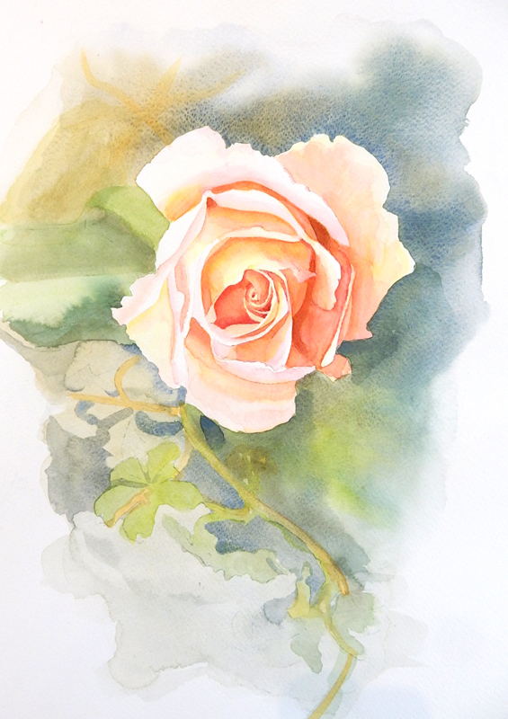 Submission-Kate-Tugwell-watercolour-rose-&-bgd.jpg