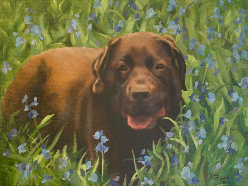 Dog-portrait---Harry-in-oil-2017.jpg