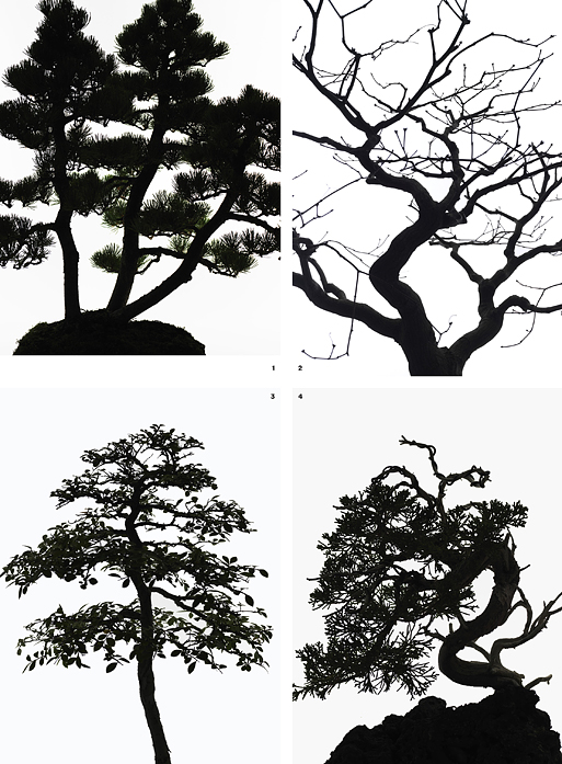 TR_April_Bonsai-4.jpg