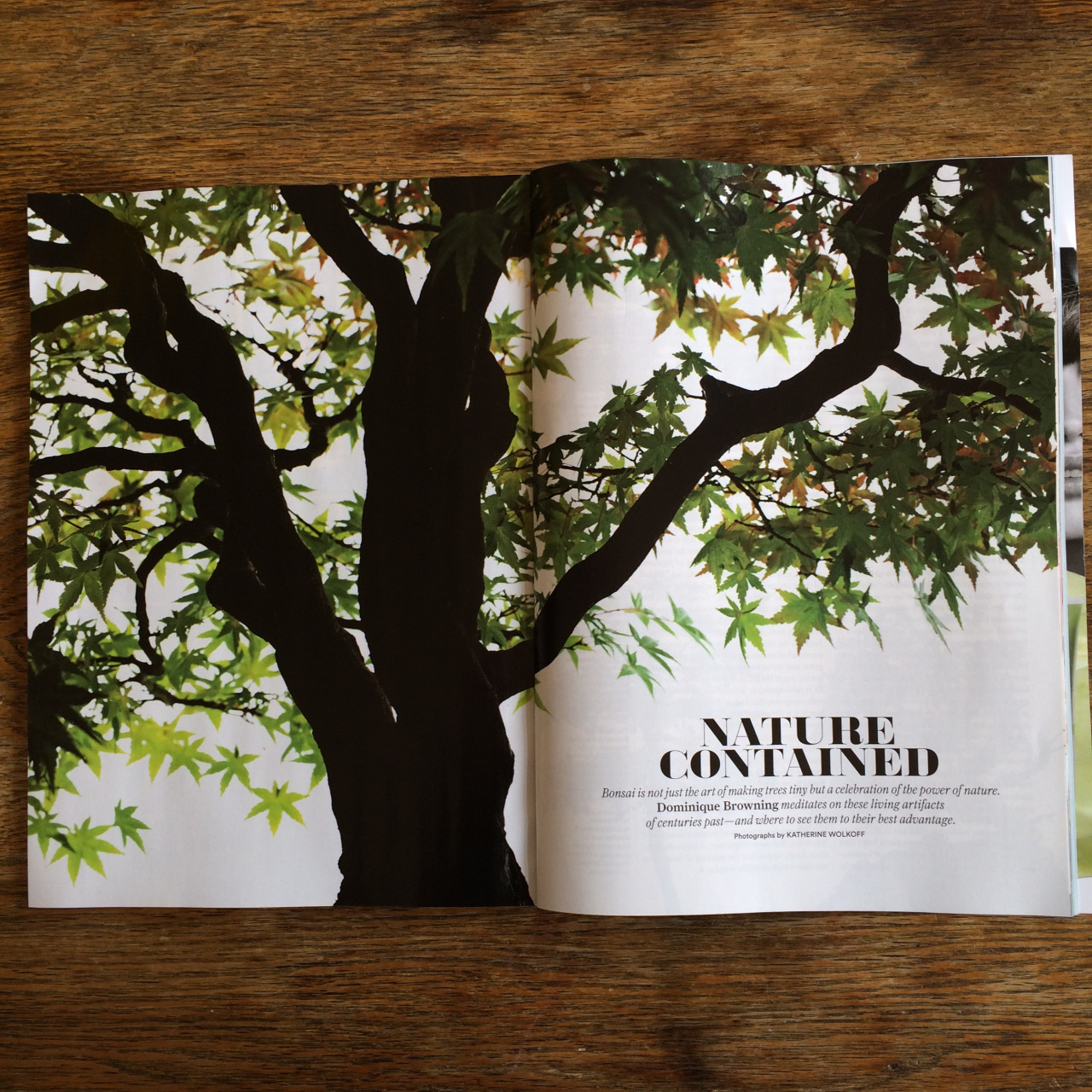 Bonsai in this month's Conde Nast Traveller