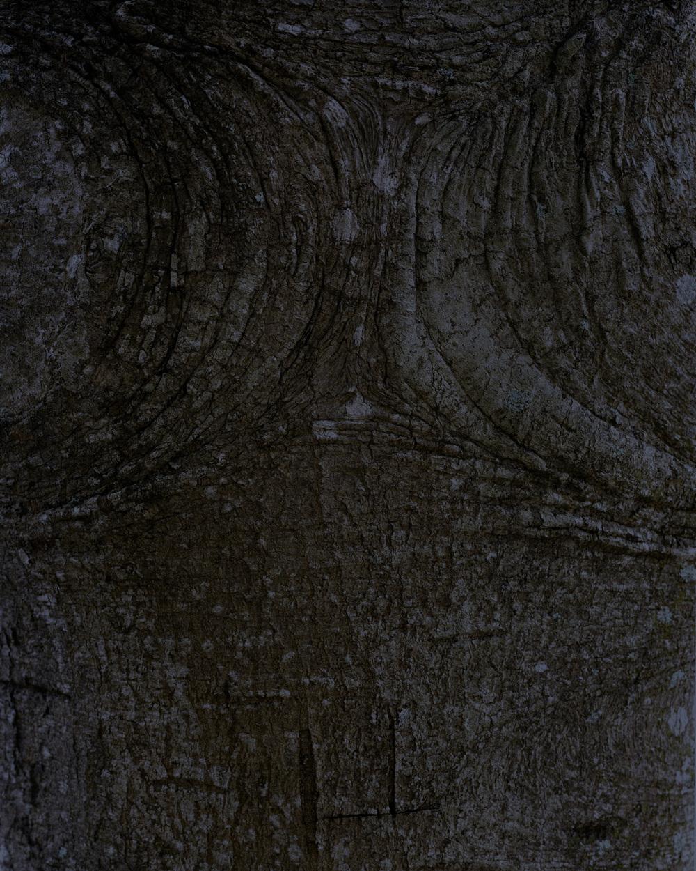 bark 10 002.jpg