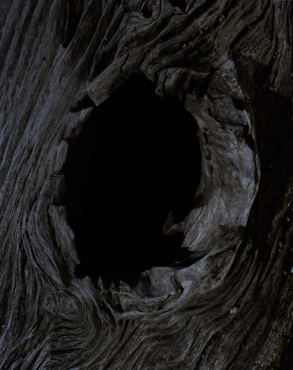 bark 10 010.jpg