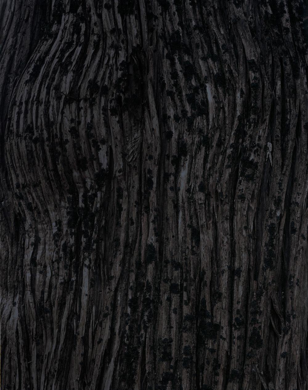 bark 10 017.jpg