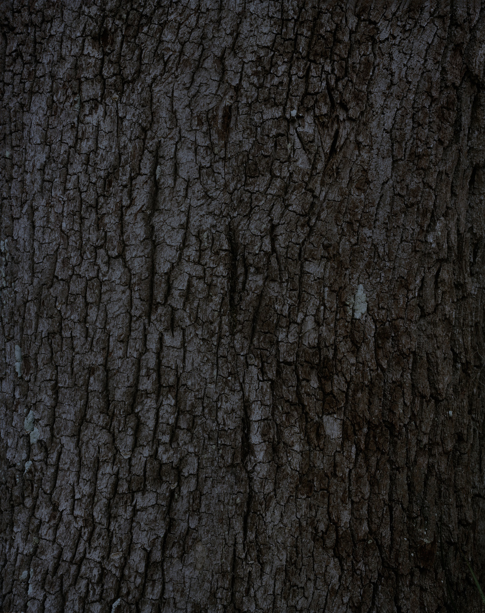 bark 10 016.jpg