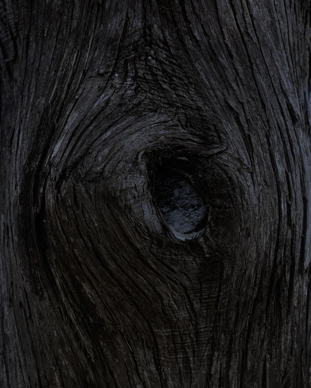 bark 10 005.jpg