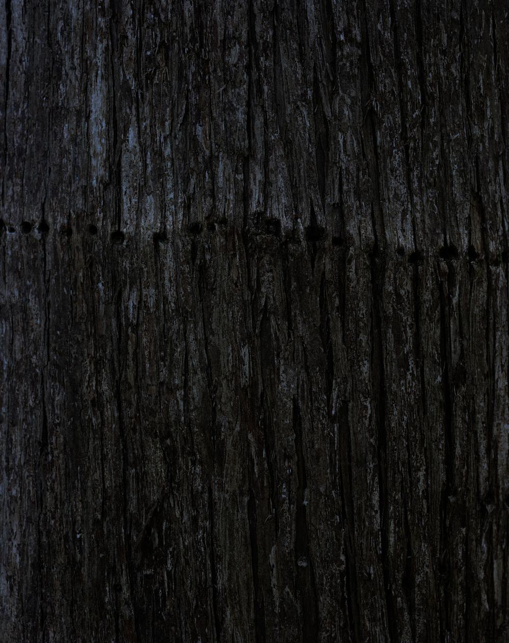 bark 10 015.jpg
