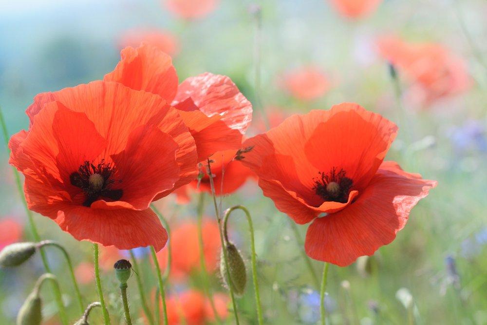 Fix the Soil, Not the Flower