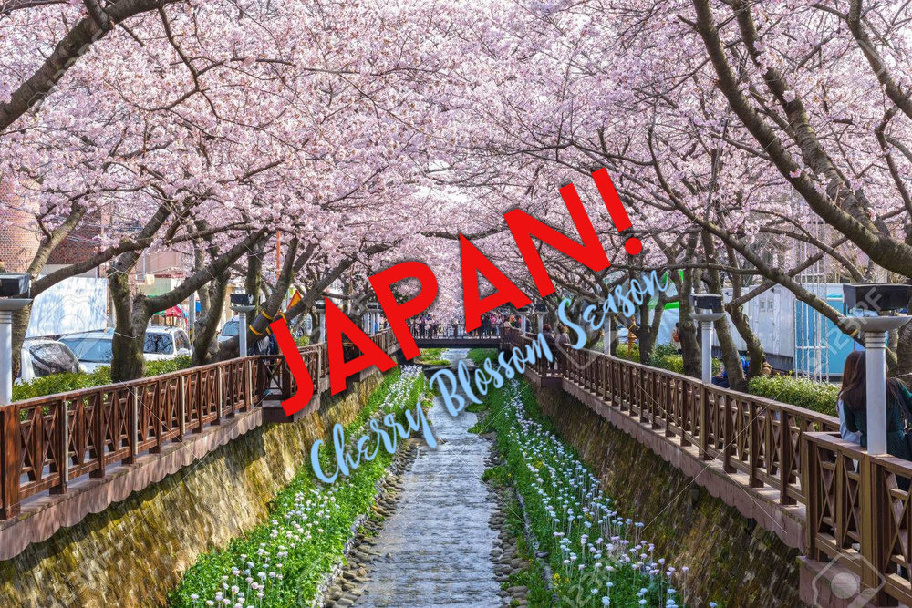 OPEN-We love going to Japan! May 16 – May 23, 2019: We will lead you through the fascinating landscapes of the ancient and the modern- from the buzzing electric vibe of Tokyo at night to the Zen garden and temples as we take in the beautiful May weather together for Cherry Blossom Season! refresh your senses!