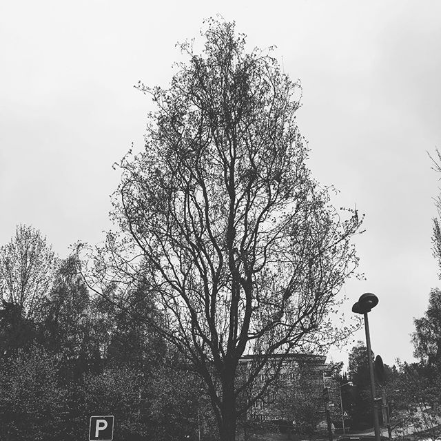 Just realized I friggin' love this tree. It's just parked on a rail-station and no one prob notices it. But I love it #tree #treeoflife #photooftheday