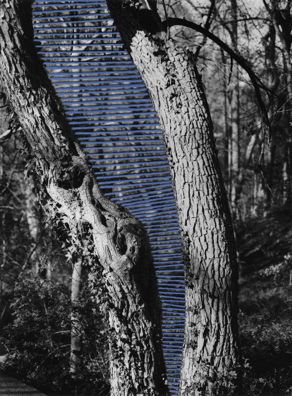 "2013  Inkjet on fine art paper, thread.   15"" x 20"""