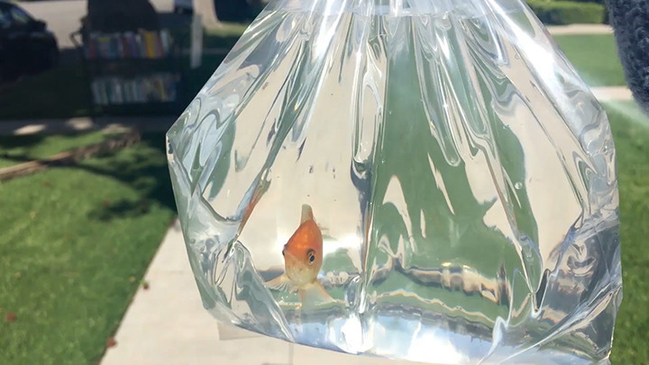 Photo 4 Goldfish_Funeral_Still_2_Small.jpg