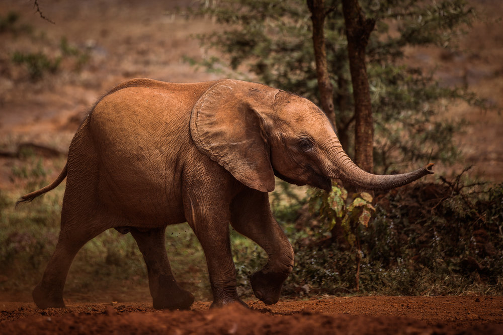 Elephant Orphanage-1.jpg