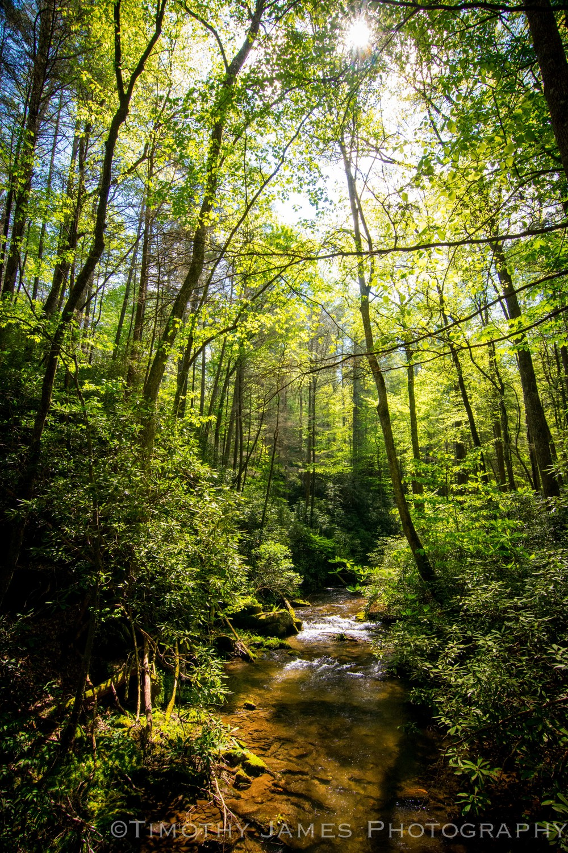 Creek Shot_TJ Kearns