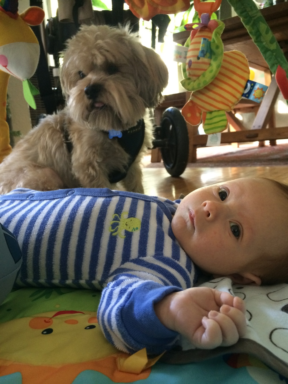 Henry is good company on the play mat