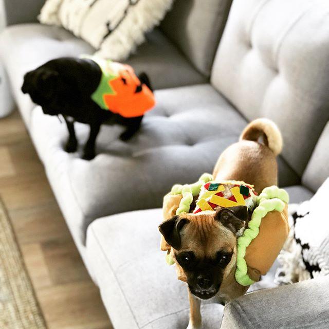 🎃🌮💖 Happy Halloween everybody 😘 . . #monalisa #puglife #pug #monaanddiego #taco #costume #halloweencostume #dressup #cute #love #style #blogger #sydney #darlinghurst #dogs #dogsofinstagram #pugsofinstagram #chug #chuglife