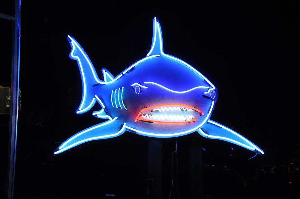 SS Large Shark.JPG